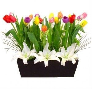 Armonia de tulipanes