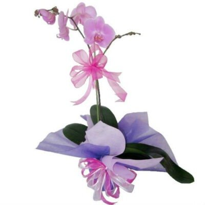 Orquidea en maceta