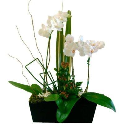 orquidea-en-base