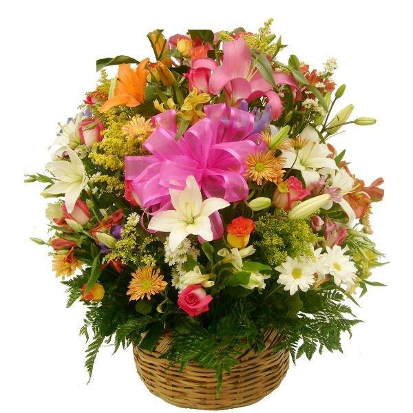 Alegría floral