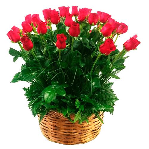 Dos docenas de rosas en canasta