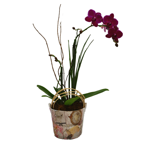Orquídea en base vintage