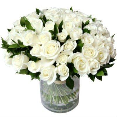 100 rosas blancas
