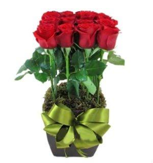 12 rosas en base 300x300