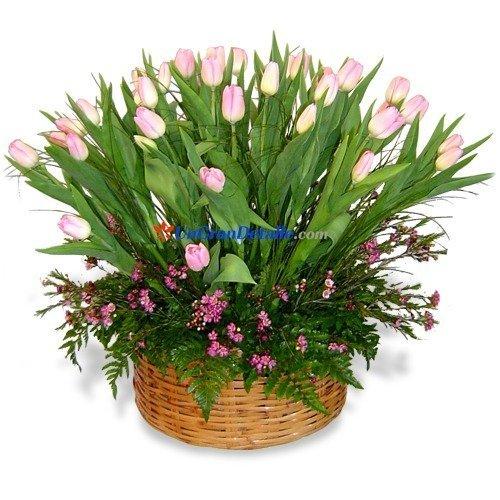 50 tulipanes en canasta