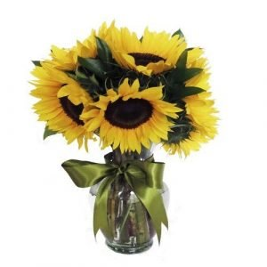 girasoles mini