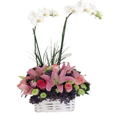 orquidea en canasa