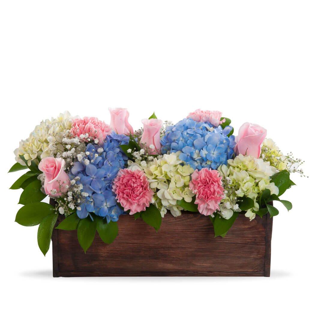 Hortensias en caja