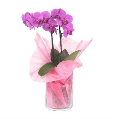 florero y orquidea